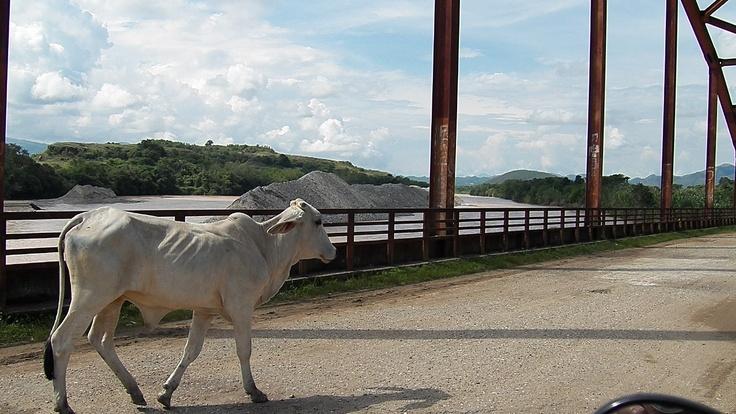 chaparral tolima puente vaca