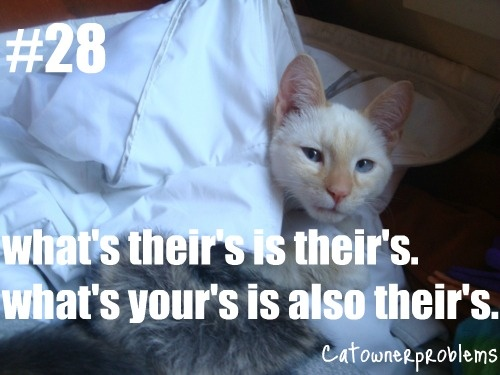 ... about Cat Owner Problems on Pinterest Computers, Cats and Cat hair