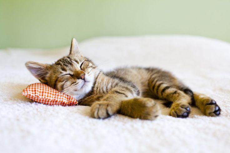 Если есть упражнения, которые можно выполнять в кровати, когда вы только-только проснулись. Значит есть такие упражнения, которые могут обеспечить крепкий и здоровый сон ;)