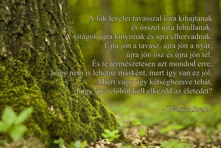 Wass Albert idézete az élet újrakezdéséről. A kép forrása: Ara Rauch közösségi oldala # Facebook