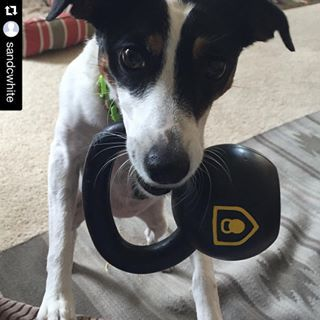 Metcon Pets   The Kettlebell Dog Toy
