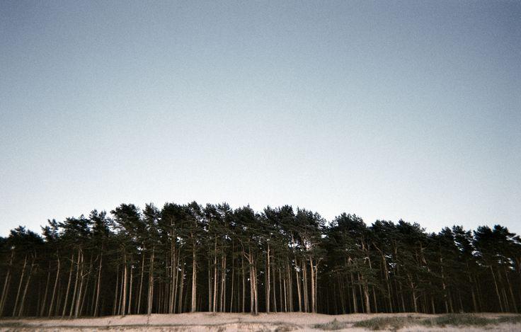 forest, sand, landscape