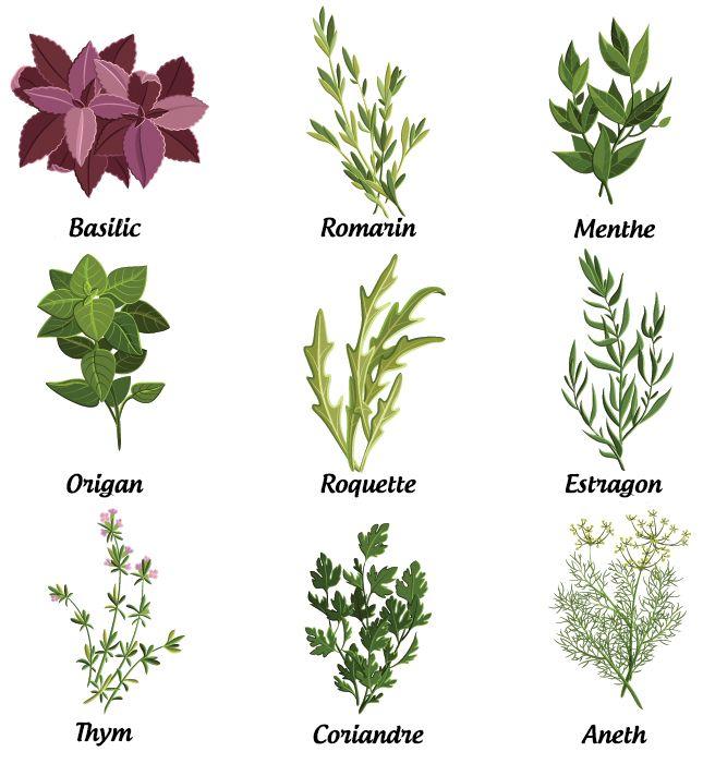 L'ABC des fines herbes fraîches : Conseils et recettes | la vie LC