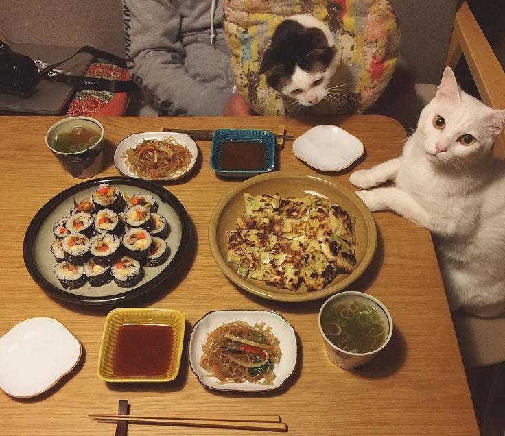 韓国定食。 キンパ、イカのチヂミ、チャプチェ♩ キンパは買ってきたや〜つ。 #八おこめ #ねこ部 #cat #ねこ #八おこめ食べ物 #韓国料理 #キンパ #チヂミ #チャプチェ