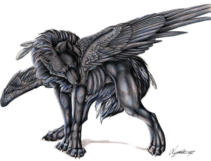 Evil black winged wolf - photo#19