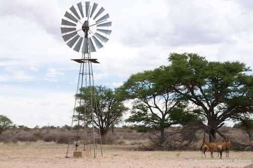 Typical desert scene - this one's  near Union's End in the Northern tip of Kgalagadi