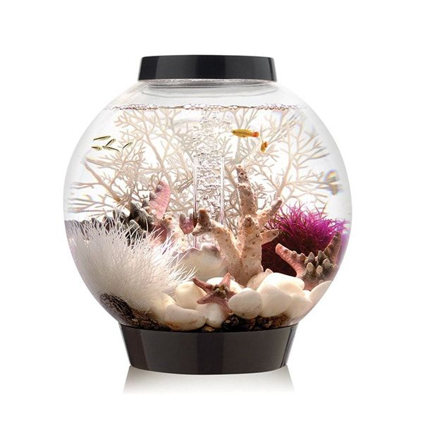 17 best biorb fish tanks images on pinterest aquarium for Aquarium boule 20 litres
