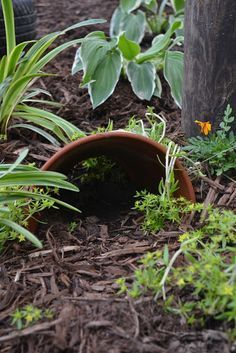 How To Make A Toad House - because this is exactly what you want to do in Queensland