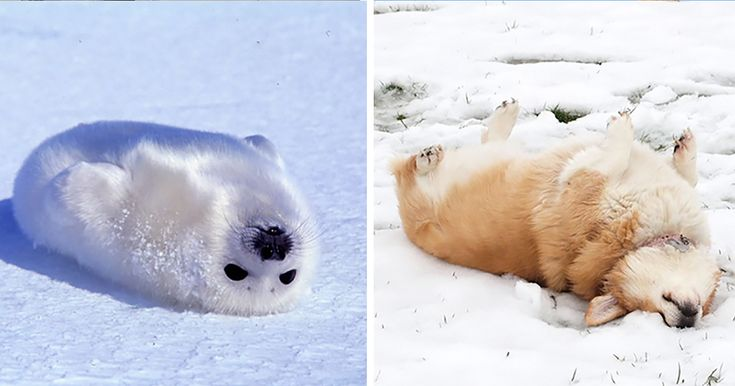 Seals Are Actually Ocean Puppies (15+ Pics) | Bored Panda