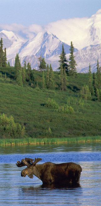 Denali National Park & Preserve, Alaska | 27 Underrated U.S. Vacation Spots You Should Visit Before You Die