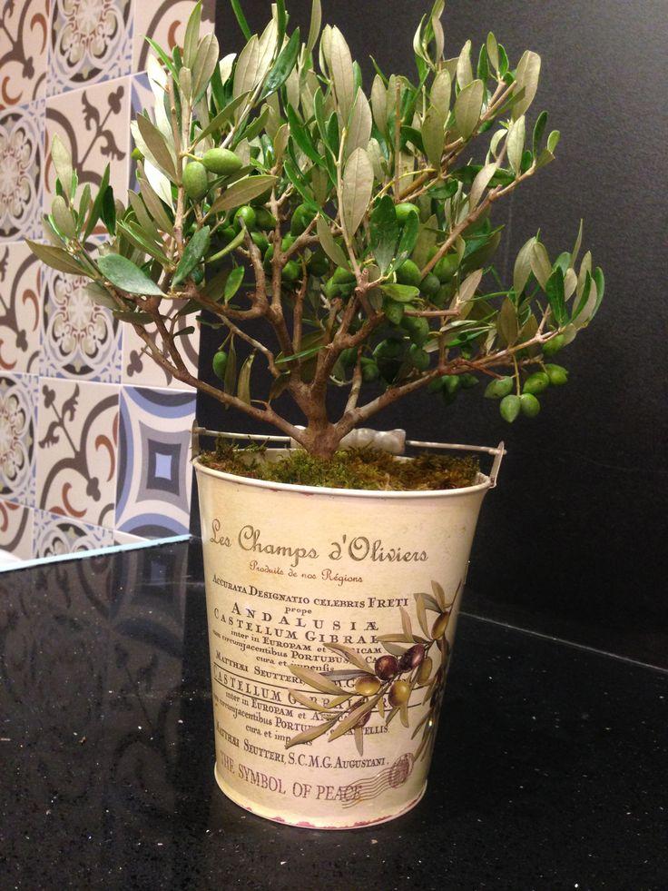 olive tree :)