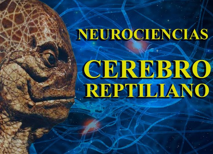 Neurociencias, Cerebro Reptiliano, Límbico y Neocortex