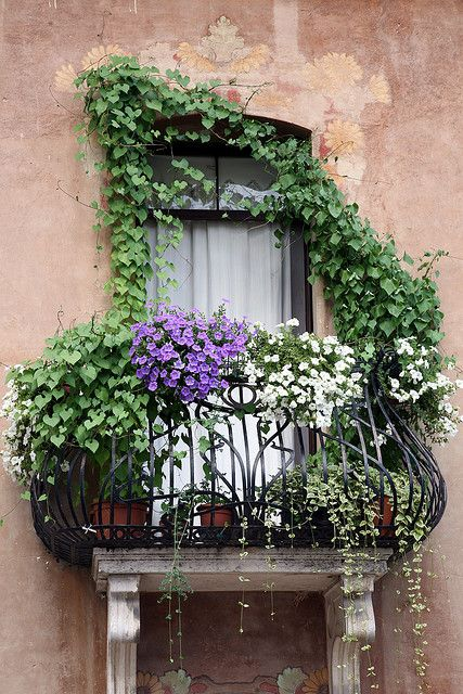 White and purple petunias along with other vined plants cascade from the wrought iron balcony. Seen in Italy. Color photograph by Donna Corless.