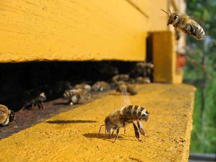 The Beekepers: Artful Documentary about Colony Collapse Disorder | Brain Pickings