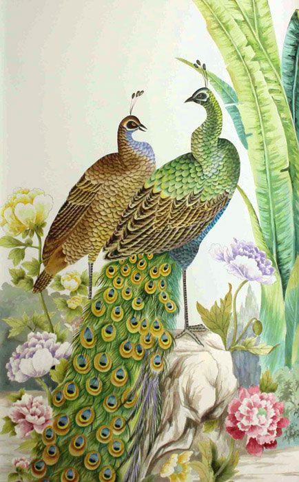 17 Best Ideas About Peacock Wallpaper On Pinterest