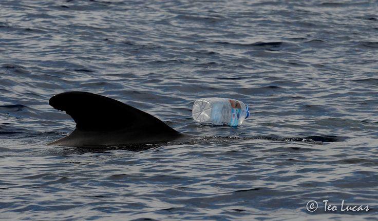 Duran unos minutos en nuestra mano pero dejan una huella ambiental innecesariamente desproporcionada, aunque sean fabricados con bioplásticos. Son los productos desechables.