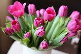 Уход за свежие срезанные тюльпаны |  Как ухаживать за срезанные тюльпаны, Уход за срезанные цветы, Как ухаживать за срезанные цветы, садоводство, Садоводство Советов и хитрость, как ухаживать за цветы, Уход за срезанные цветы, Популярное Pin
