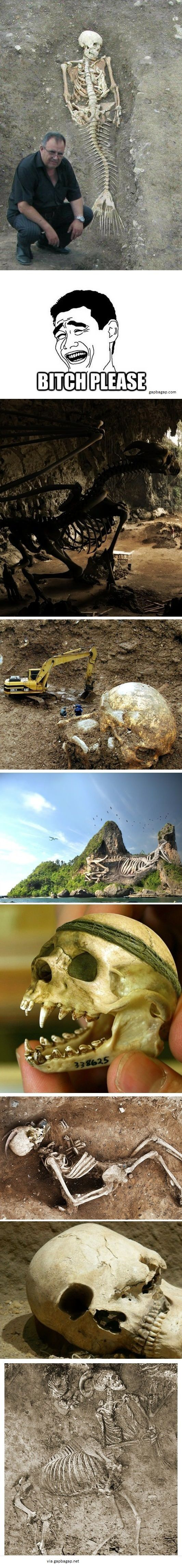 Funny Pictures Of Skeletons