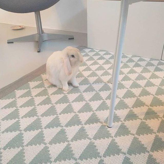 176 vind-ik-leuks, 15 reacties - Leen Bakker (@leenbakker) op Instagram: 'Ook het konijn Joep , van @bijelisethuis, is fan van ons vloerkleed Malmo. #regram #vloerkleed…'