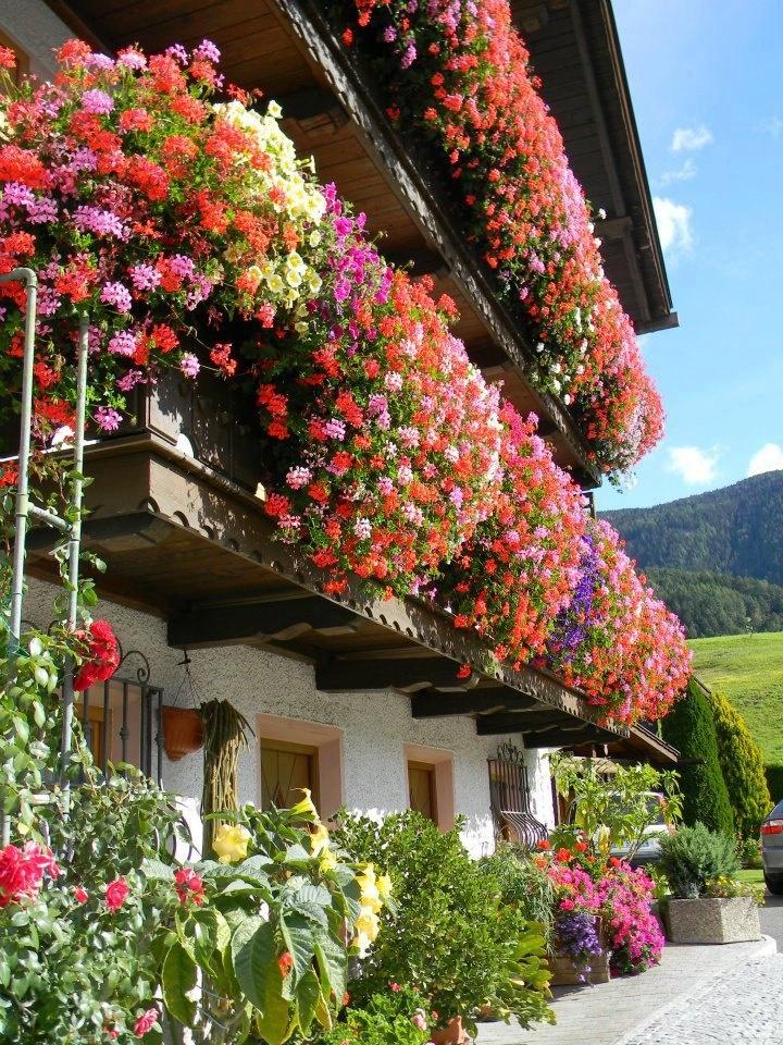 piante fiorite in montagna