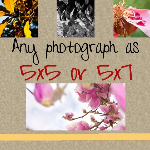 Any image as a 5x5 or 5x7 print Free domestic by AulaniPhotographyDecor Ideas, Prints Free, Gift Ideas, Handmade Art, Etsy Finding, 5X7 Prints, 11X14 Prints, 4X6 Prints, Etsy Items