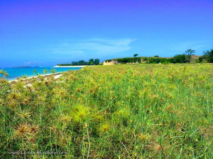 Pantai Cemara (Cemara beach). A beautiful beach in East Lombok, Indonesia. For more information, please visit www.LombokExplore.com.