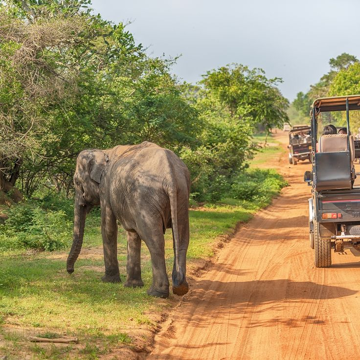 The adrenalin was pumping and our eyes were wide, while on the hunt for mating leopards - Yala National Park, Sri Lanka