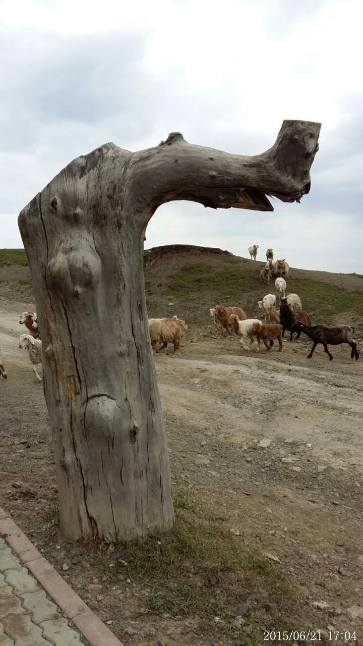 North Xinjiang 06