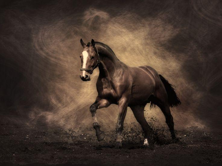varjokuvia, hevonen taustakuvia, pöly vektori, savu taustat, väri materiaali