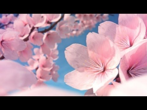 ▶ How to Make Cherry Blossoms in Blender - YouTube
