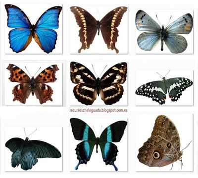 Recursos Chele Guada: 50 Mariposas en Png (335 Mb)
