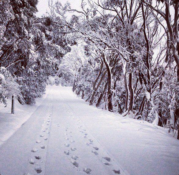 Snow Australia - foot steps in the snow. Mount Buller, Victoria #snowaus