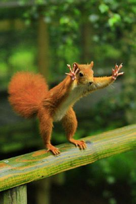 STOP!  What is this squirrel trying to tell you?