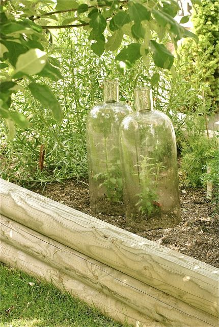 home made cloches: cut the bottoms off large bottles