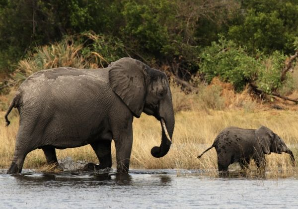 Pilanesberg National Park in South Africa
