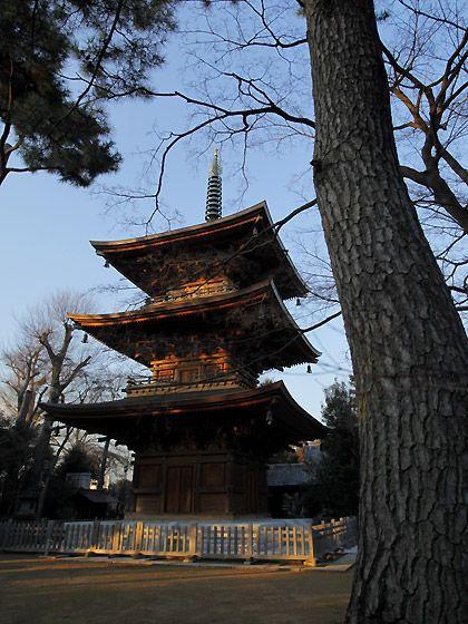 豪徳寺@東京・豪徳寺(Gotoku-ji Temple)