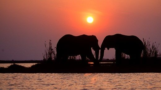 Travel tip: Destinations worth checking out in 2015: 1. Botswana #Africa #elephants #sunset