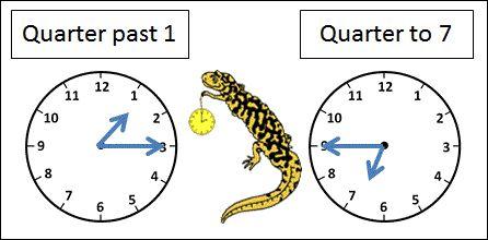 quarter past and quarter to picture 2nd grade math worksheets pinterest salamanders clock. Black Bedroom Furniture Sets. Home Design Ideas