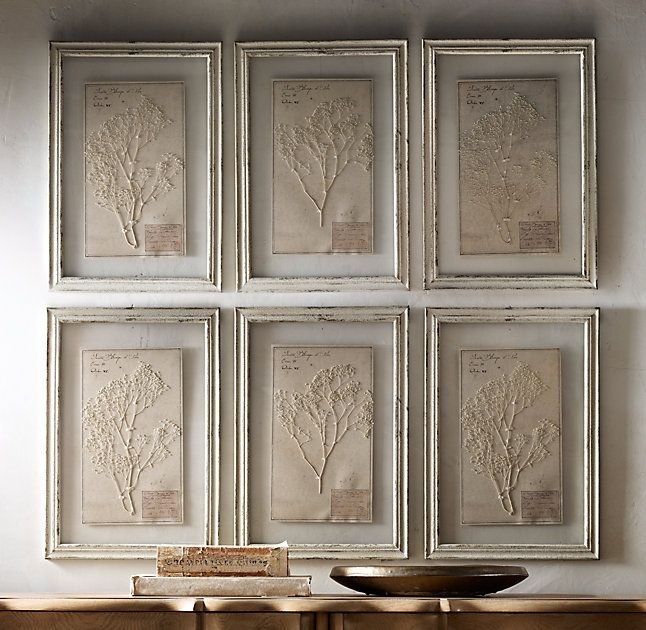 19th C Framed Herbariums Set Of 6 Ivory Gallery