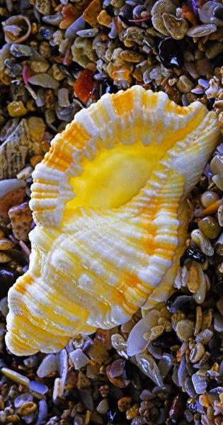 sea shell                                                                                                                                                                                 More