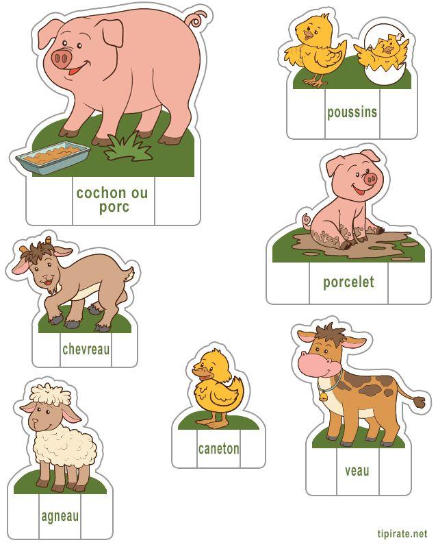Les animaux de la ferme, cochon, poussins, porcelet, chevreau, agneau, caneton, veau