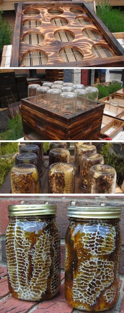 DIY beehive in a jar - I personally [tautology] have no idea or no plans to do this but it is interesting!!
