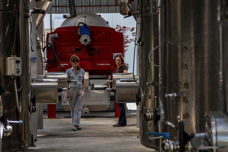 Domeniile Sahateni wine making process. Visitors at the winery.  https://www.facebook.com/AureliaVisinescuWines