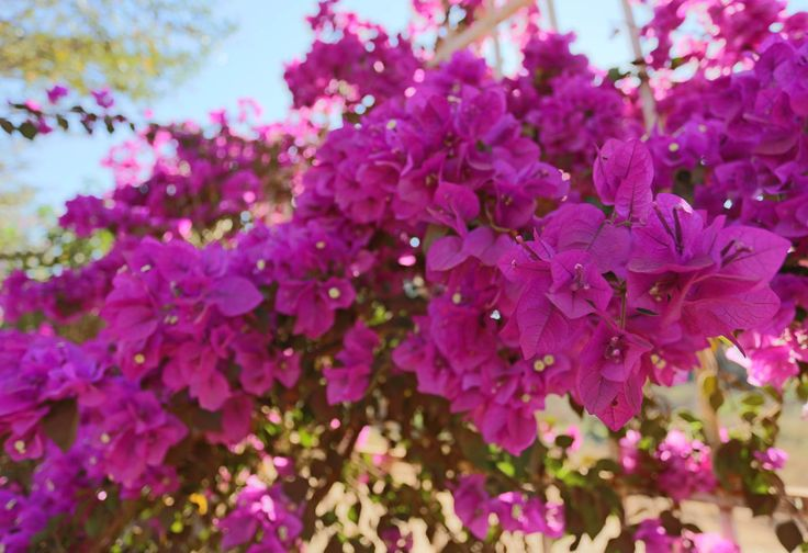 Purple flowers taken with Canon EOS 6D DSLR camera