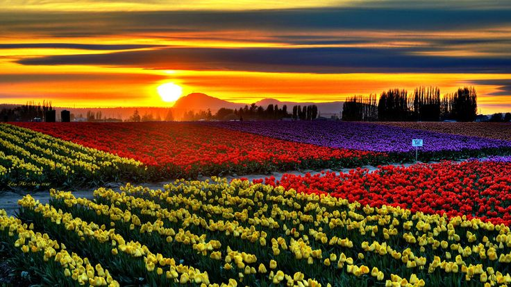 Skagit Valley, Washington - The state's annual tulip festival takes place during the month of April–and gives the Dutch some serious competition.