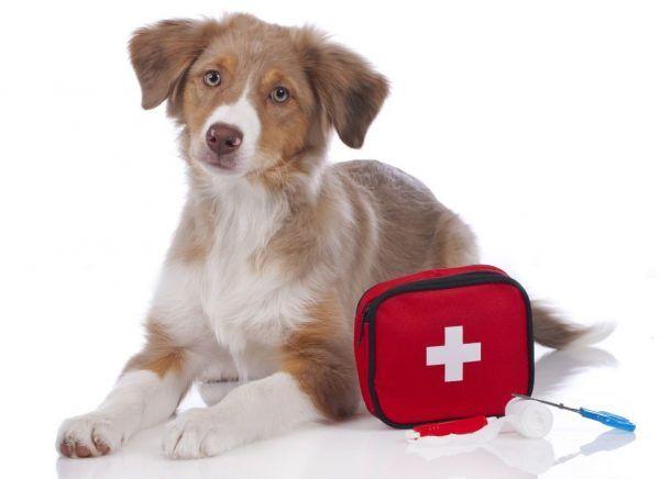 Cosa deve contenere il kit di pronto soccorso per cani - http://www.baubaunews.com/miscellanea/cosa-deve-contenere-il-kit-di-pronto-soccorso-per-cani/ http://www.baubaunews.com/wp-content/uploads/2016/10/kit-pronto-soccorso-per-cane-5-600x436.jpg