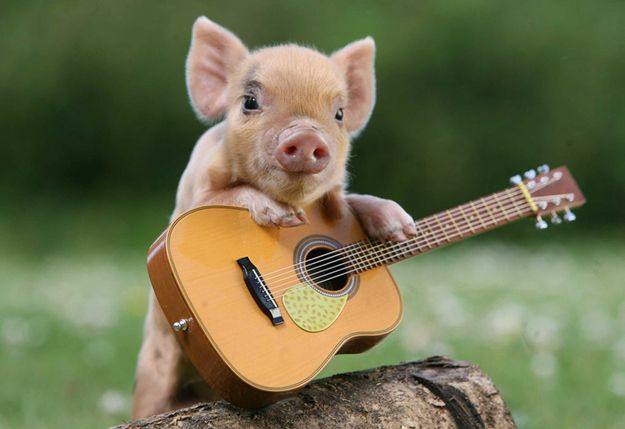 """""""Tiny Pig, Tiny Guitar, Tiny Log"""" 