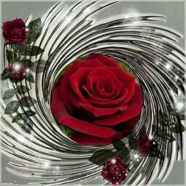 Gorgeous Red RosesLove FlowersFlower