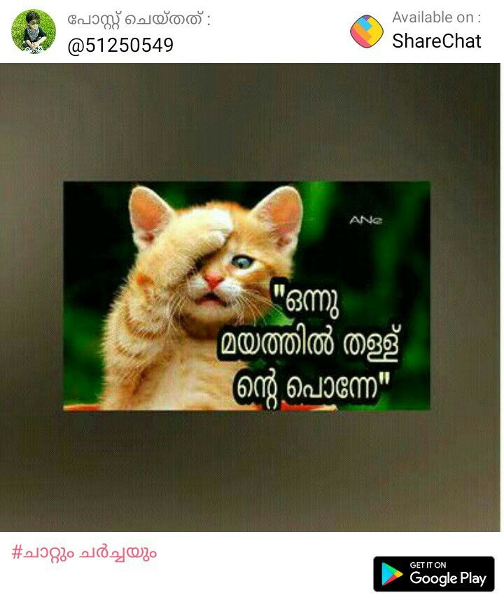 Pin By Smitha Sajeesh On Chat Cats Google Play Animals
