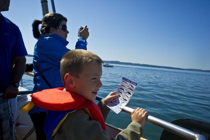 Excursion exaltante d'observation des baleines et de la faune de la baie de Fundy sur le spacieux M.V. Island Quest. Rafraîchissements inclus. | Island Quest Marine | Nouveau Brunswick, vacances au Canada #ExploreNB
